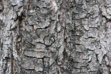 albero-con-zoom