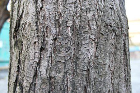 albero-senza-zoom