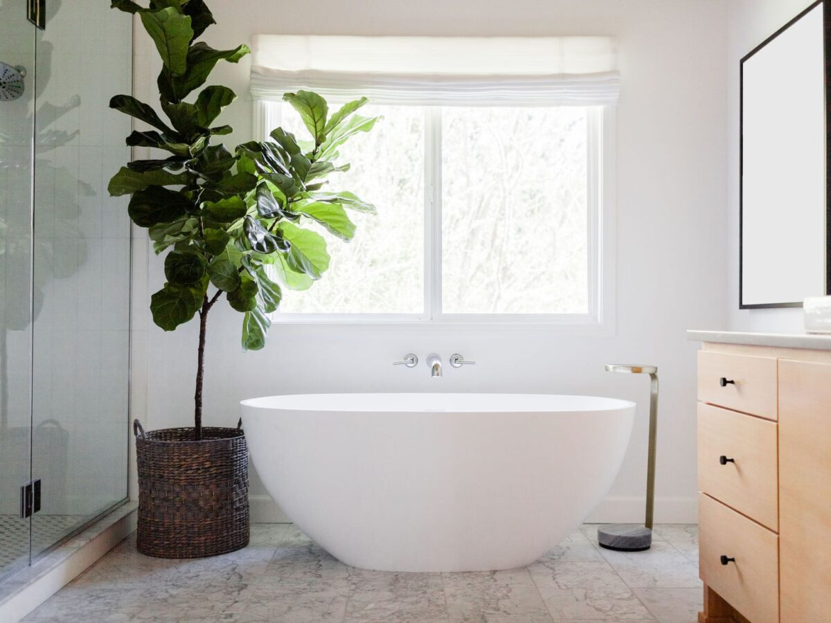 10-piante-ideali-per-il-bagno 10