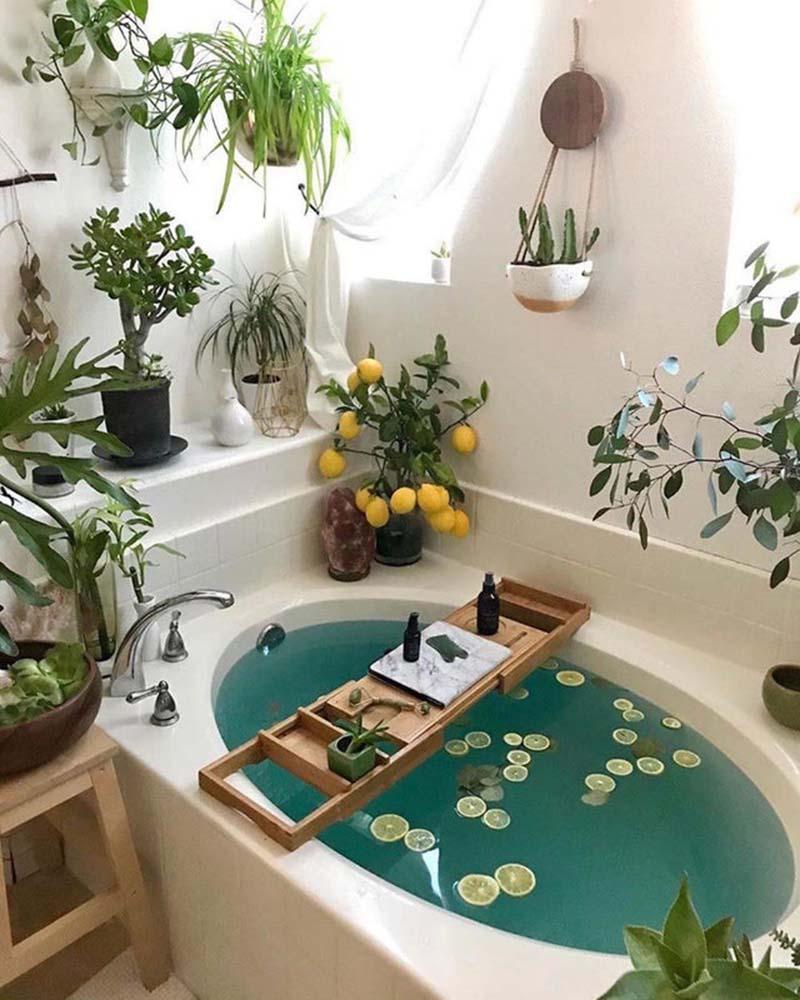 10-piante-ideali-per-il-bagno 11