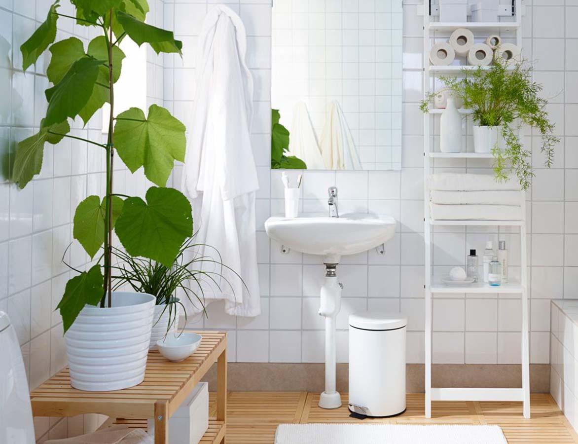 10-piante-ideali-per-il-bagno 12