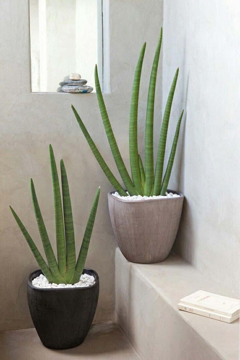 10-piante-ideali-per-il-bagno 13
