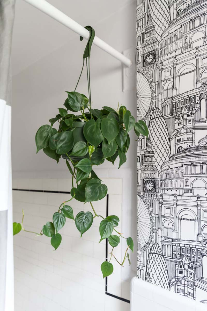 10-piante-ideali-per-il-bagno 14