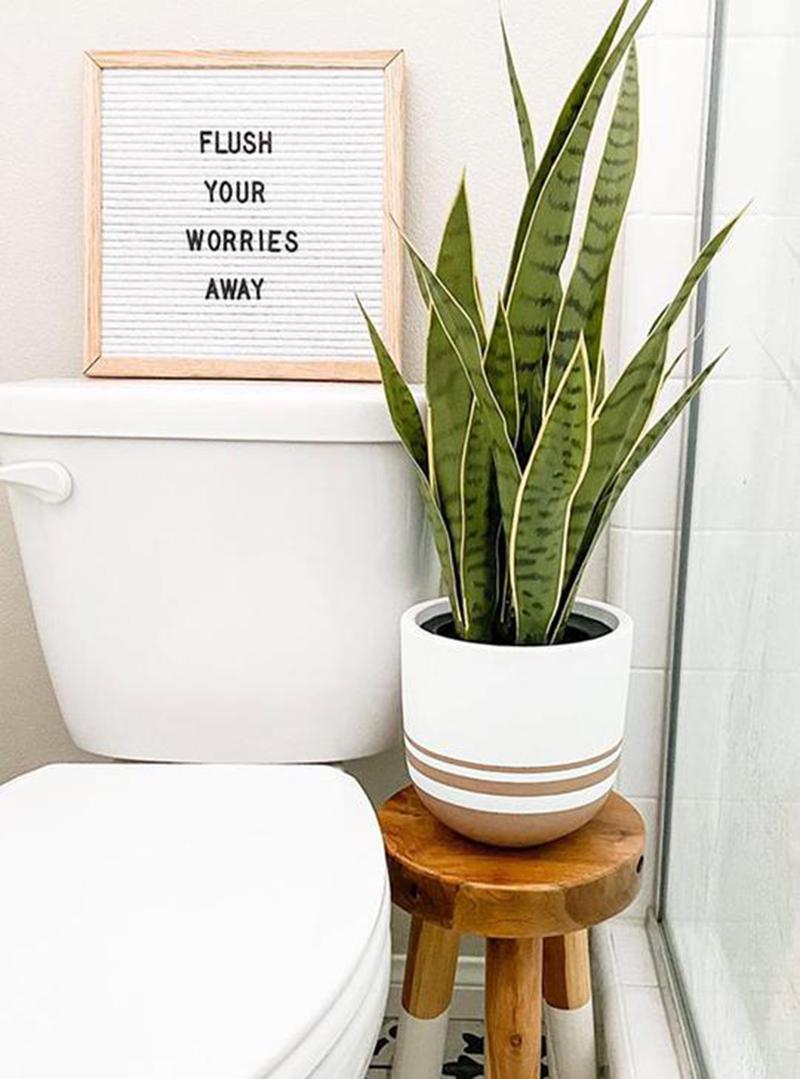 10-piante-ideali-per-il-bagno 16