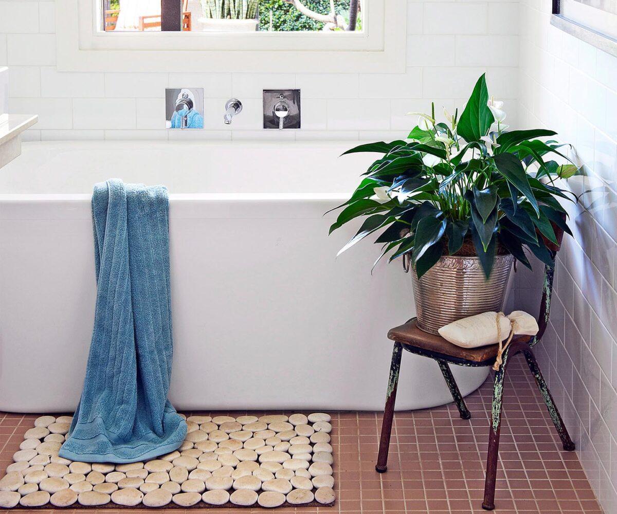 10-piante-ideali-per-il-bagno 17