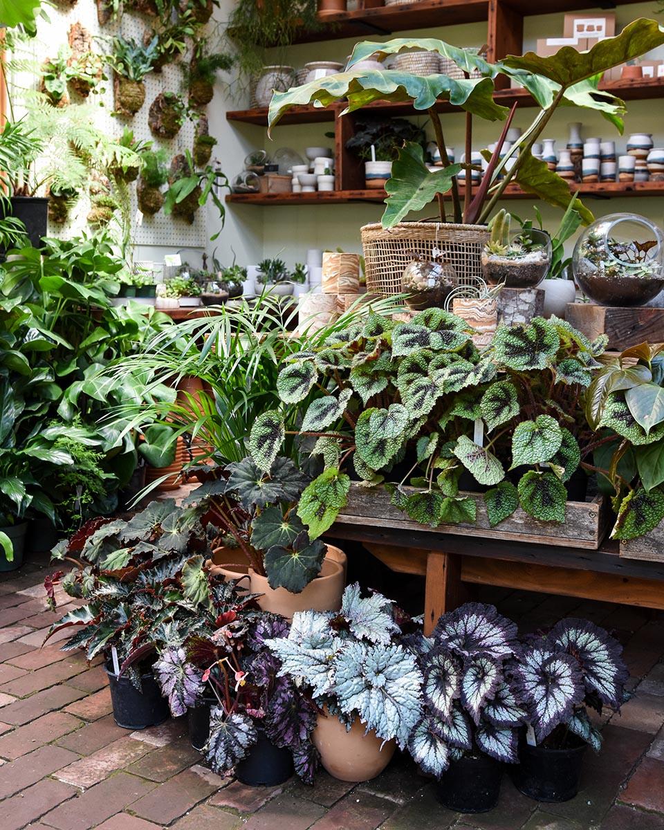 10-piante-ideali-per-il-bagno 18