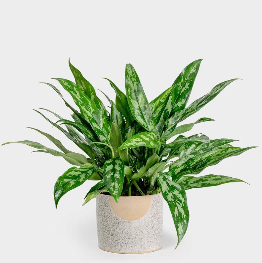 10-piante-ideali-per-il-bagno 19