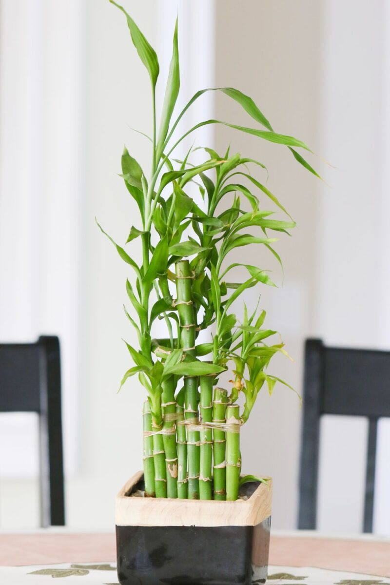 10-piante-ideali-per-il-bagno 4