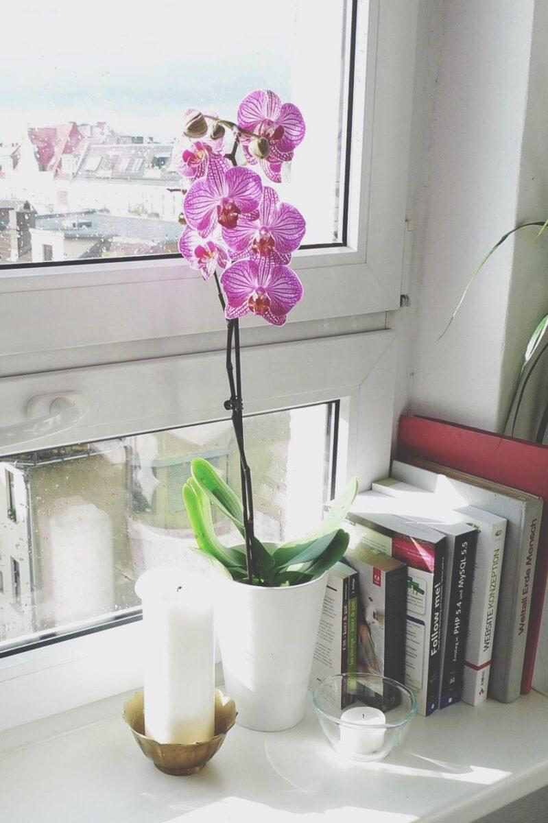 10-piante-ideali-per-il-bagno 7
