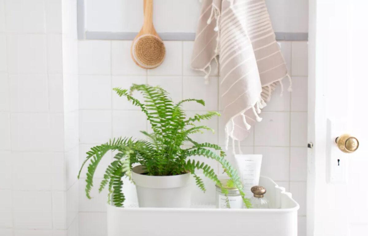 10-piante-ideali-per-il-bagno 8
