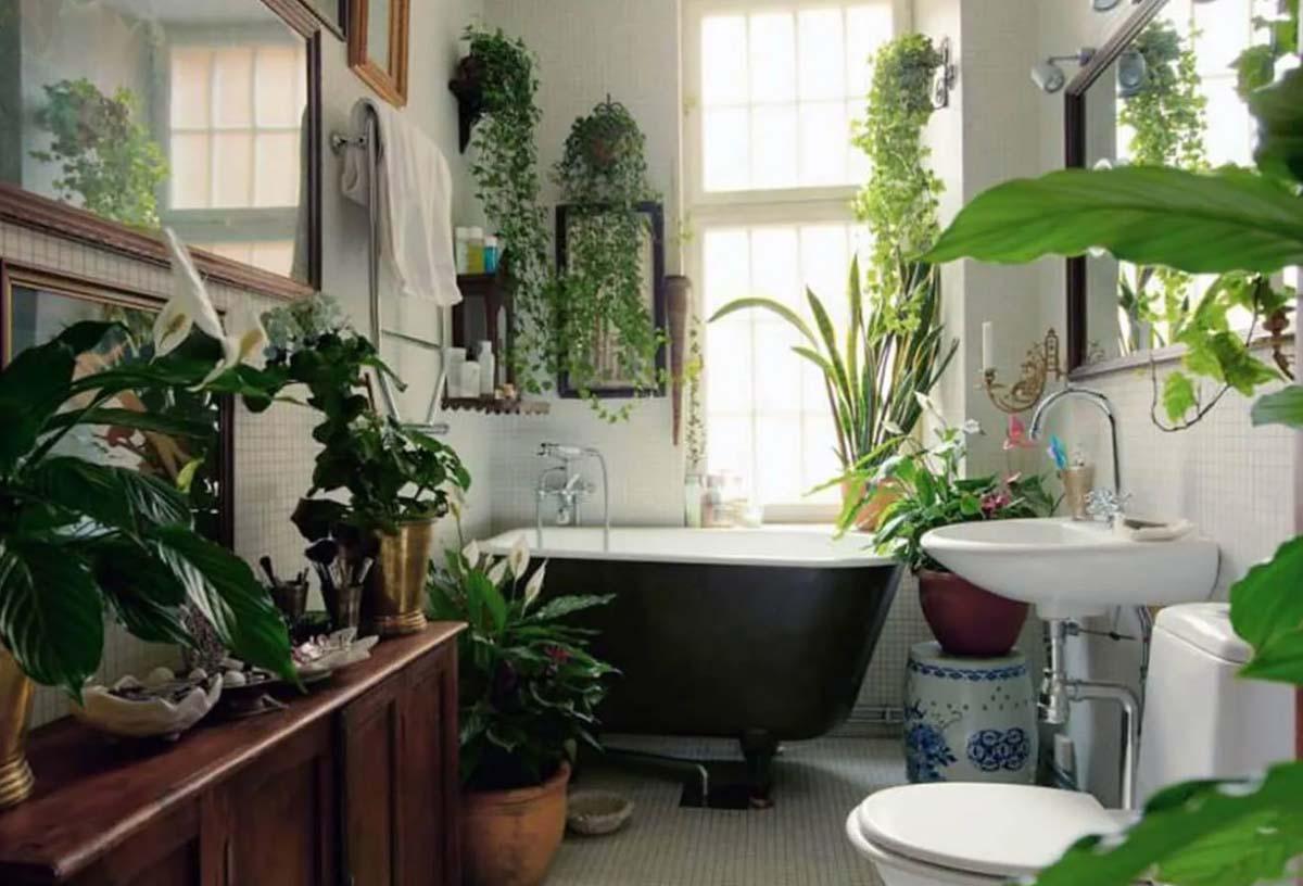 10-piante-ideali-per-il-bagno 9