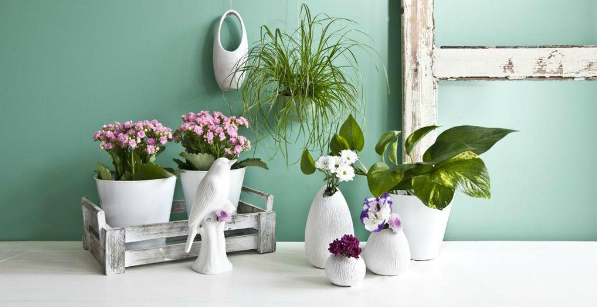 10 piante semplici da curare 1