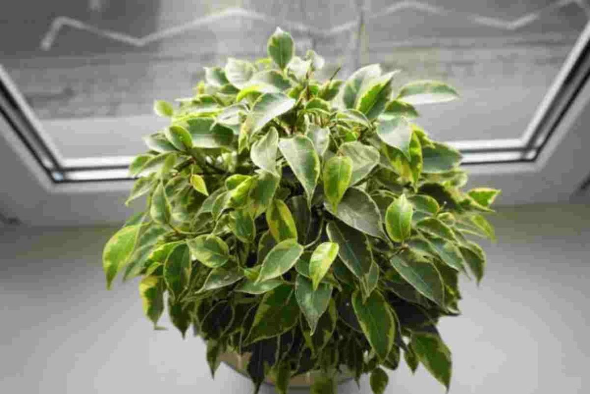 10 piante semplici da curare 11