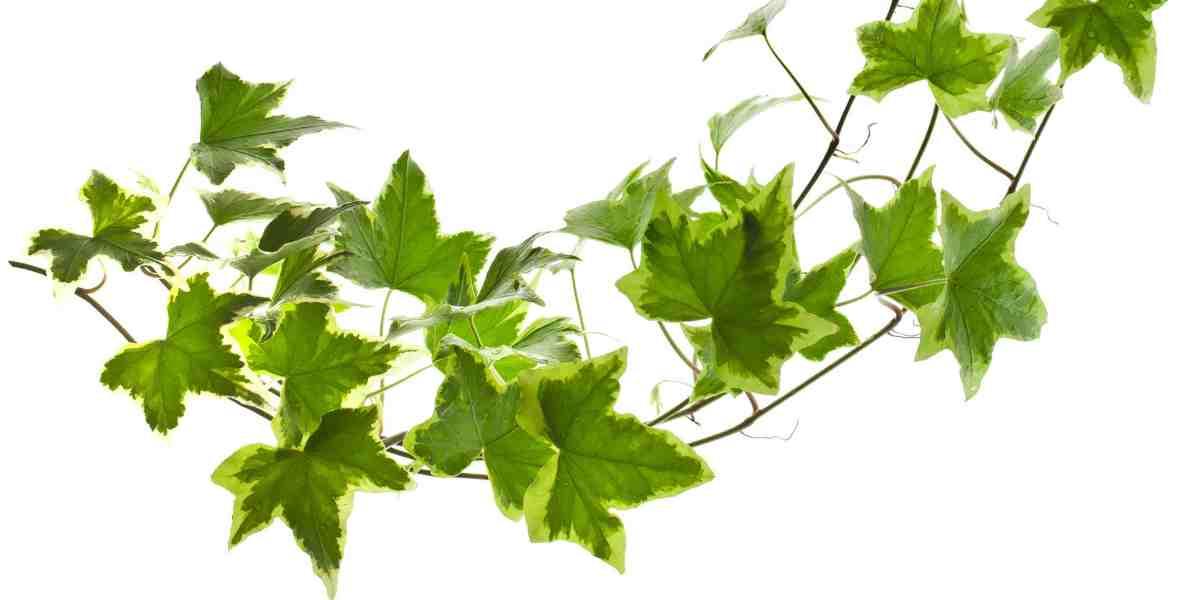10 piante semplici da curare 12