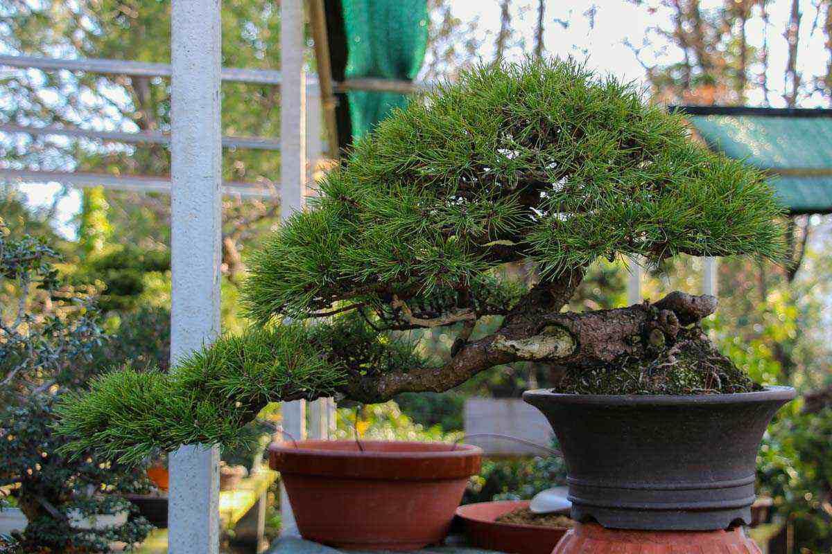 10 piante semplici da curare 5