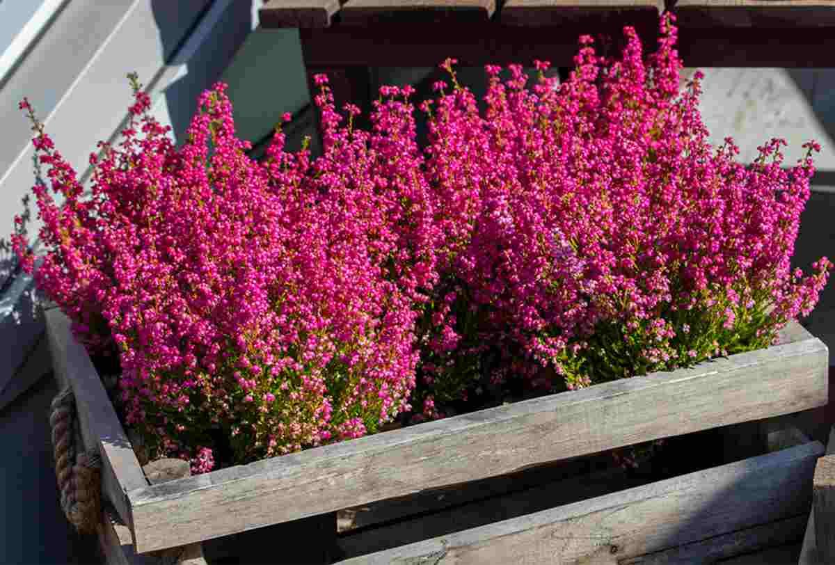 10 piante semplici da curare 6