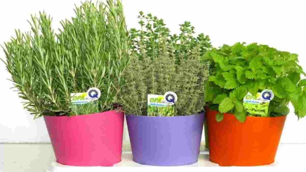 10 piante semplici da curare 9