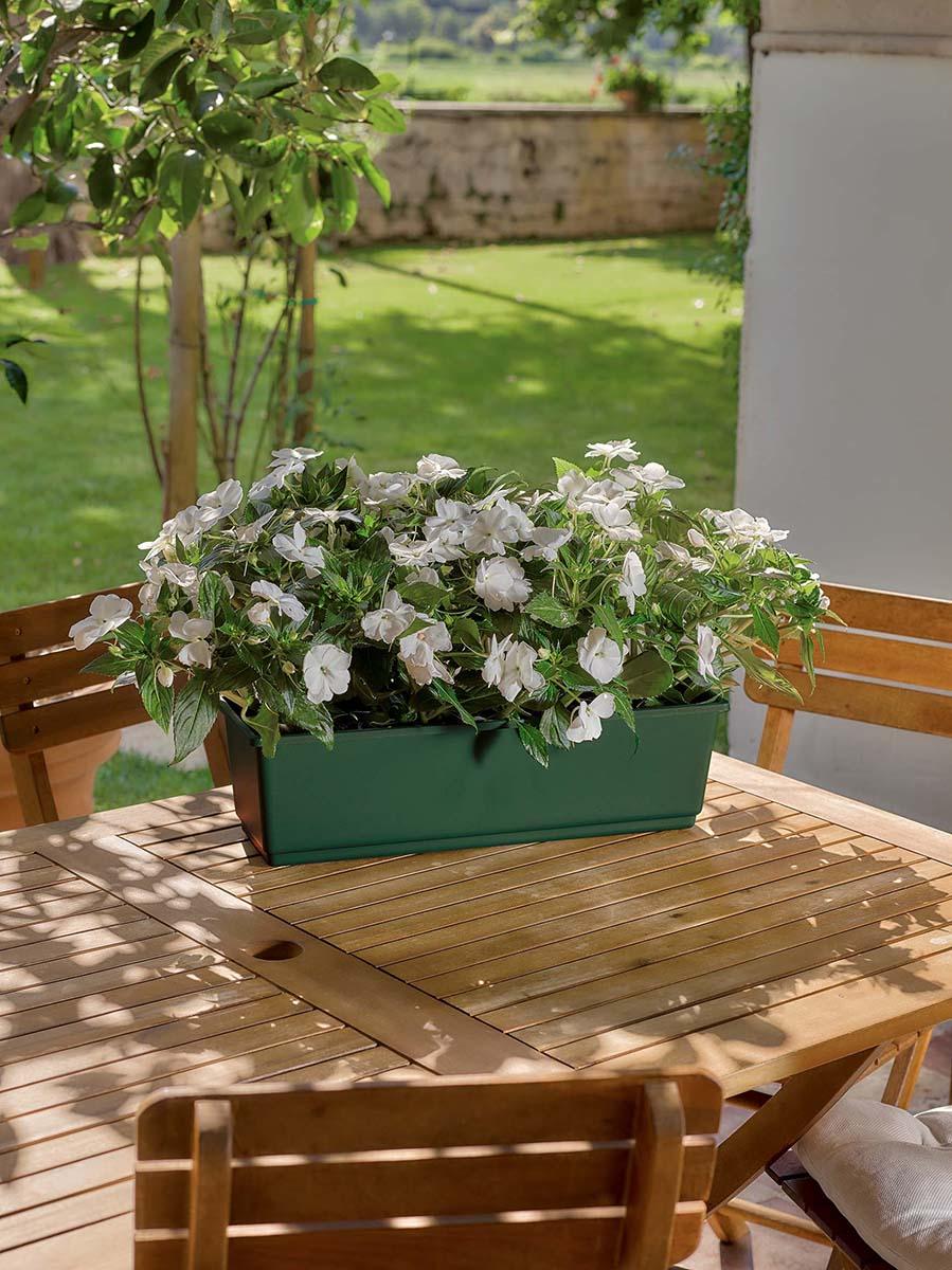 piante-sempreverdi-balcone 11