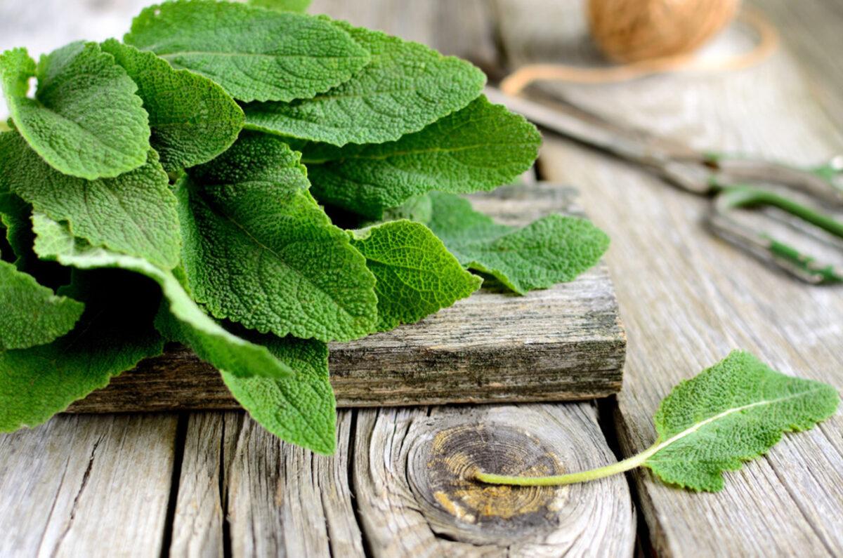 piante-sempreverdi-balcone