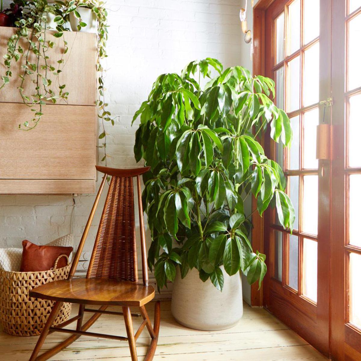 piante-sempreverdi-balcone 16