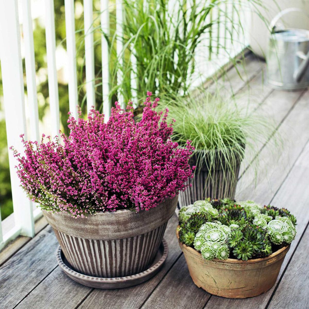 piante-sempreverdi-balcone 8