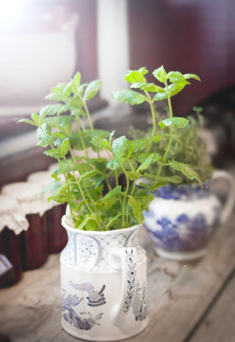vaso-con-pianta-minimal