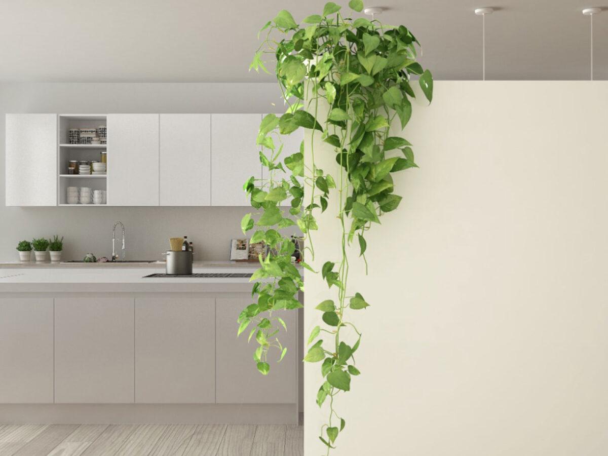 8-piante-da-avere-in-cucina-16