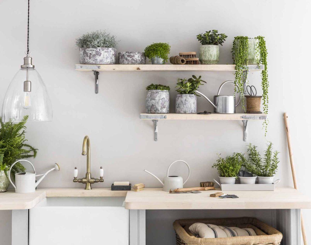 8 piante da avere in cucina