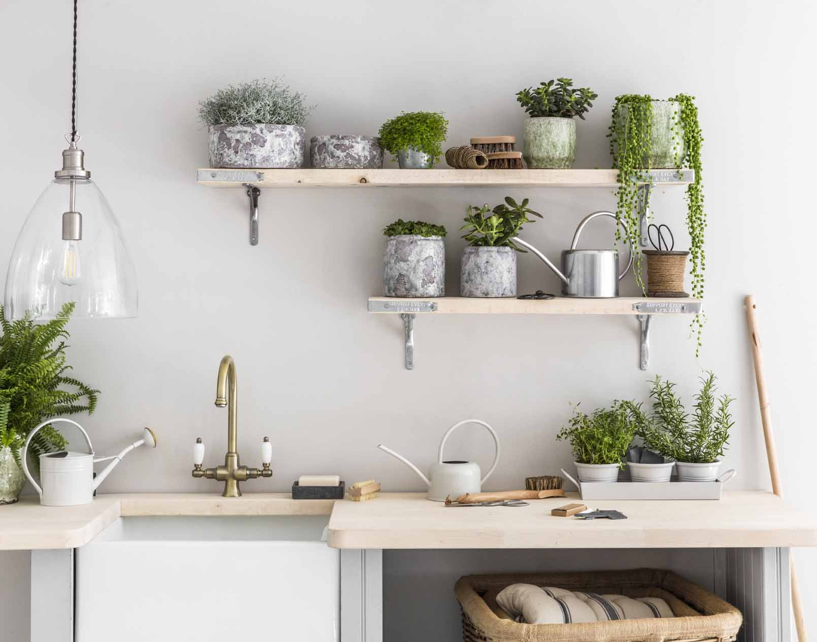 8-piante-da-avere-in-cucina-18