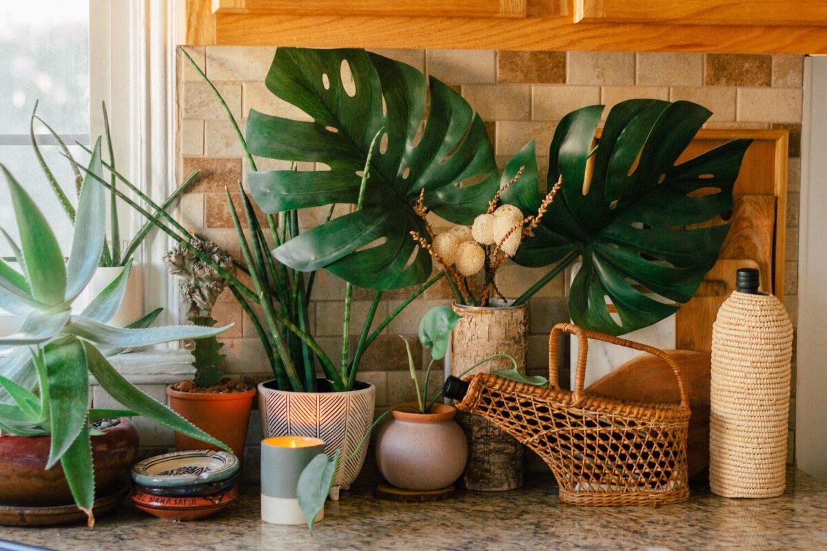 8-piante-da-avere-in-cucina-20