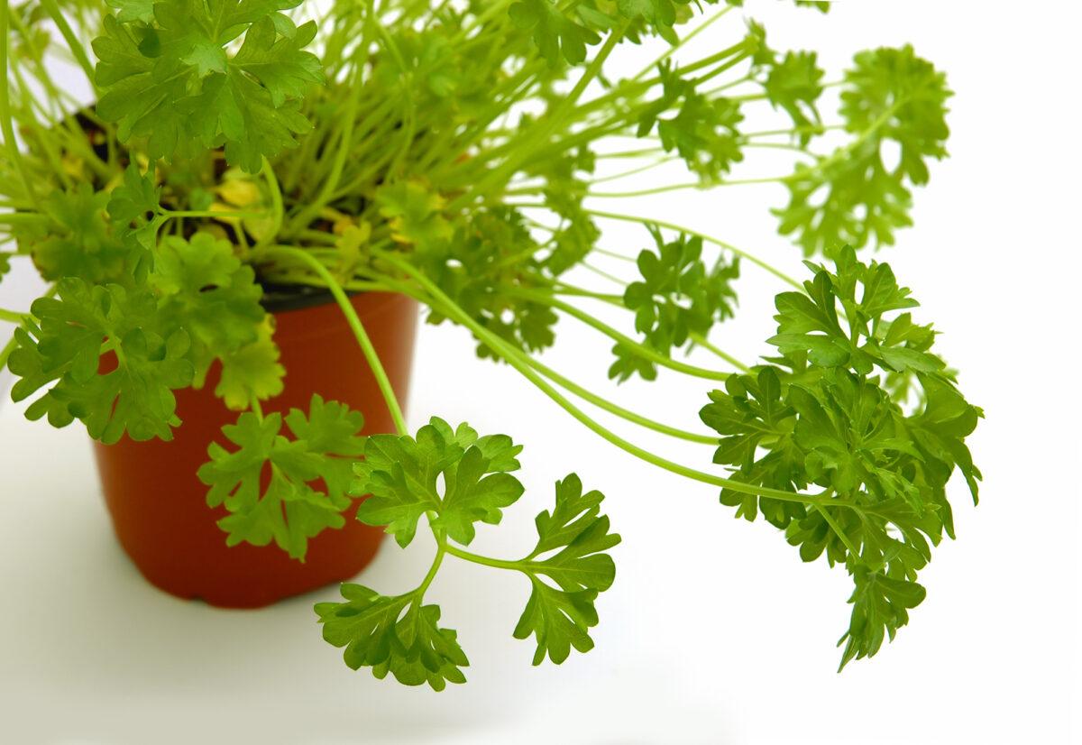 8-piante-da-avere-in-cucina-4