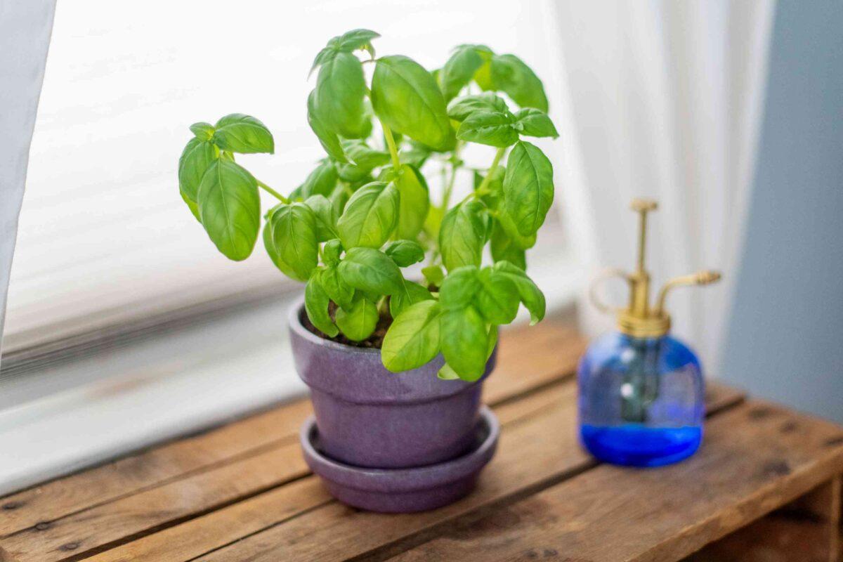 8-piante-da-avere-in-cucina-8