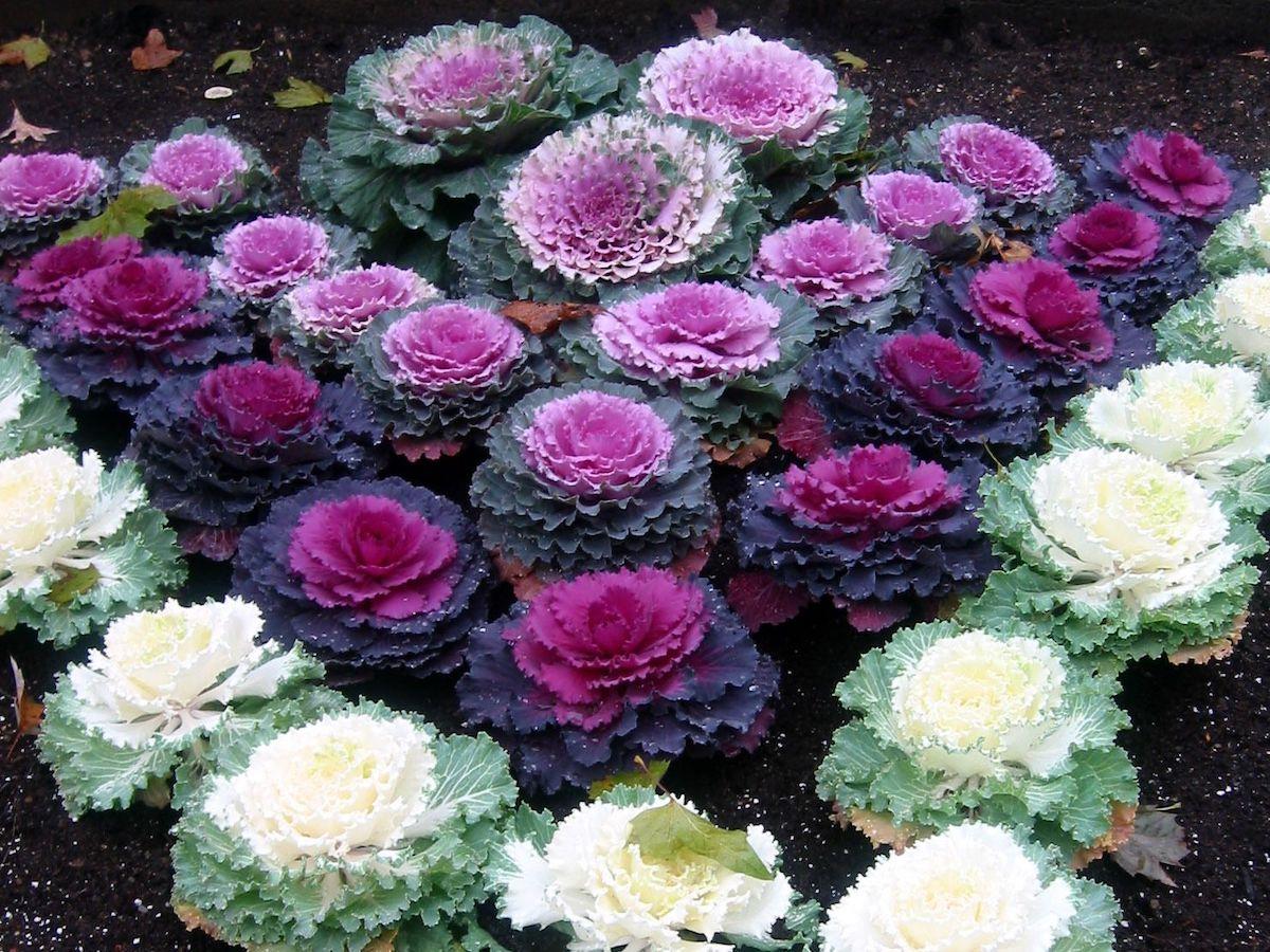 Piante che fioriscono in inverno: da esterno e da interno ...