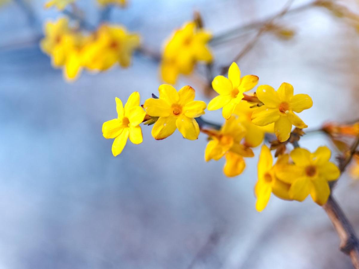 Piante che fioriscono in inverno: da esterno e da interno, le più belle