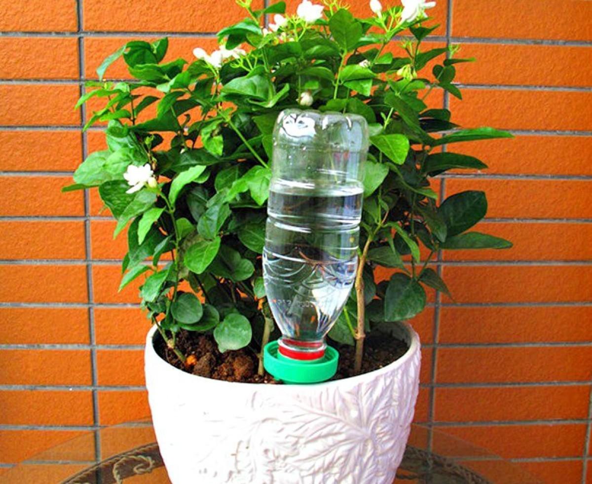 5 consigli per innaffiare le piante nel periodo estivo 1