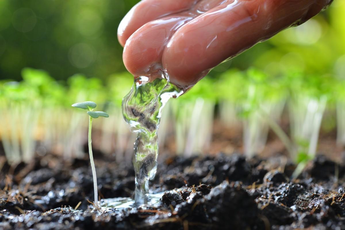 5 consigli per innaffiare le piante nel periodo estivo 2