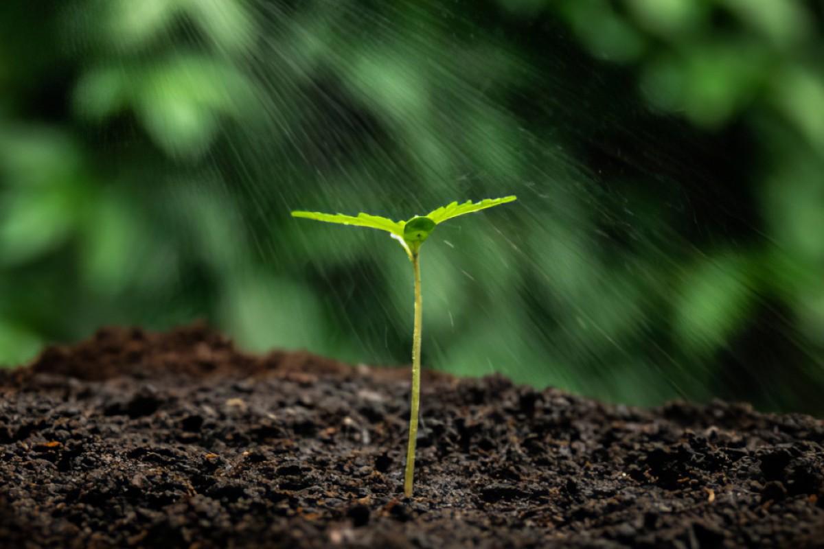 5 consigli per innaffiare le piante nel periodo estivo 4