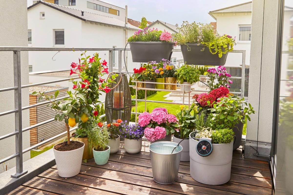 5 consigli per innaffiare le piante nel periodo estivo 5