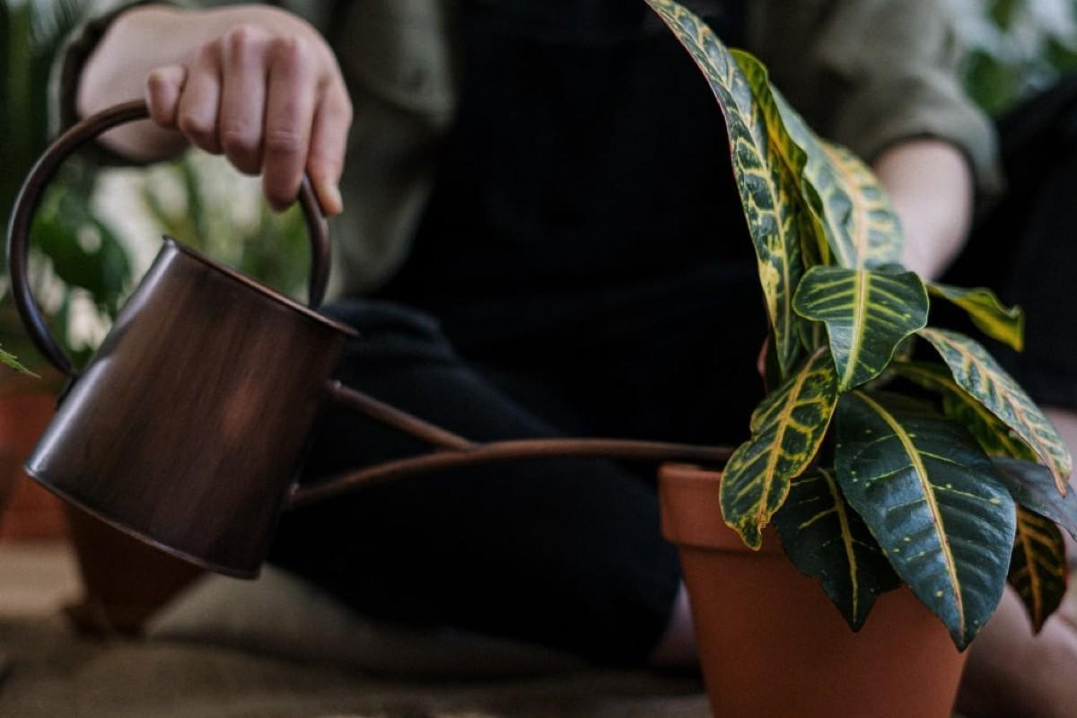 I 5 errori da non fare quando bagnamo le piante 2