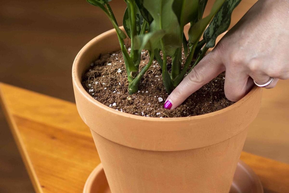 I 5 errori da non fare quando bagnamo le piante 7