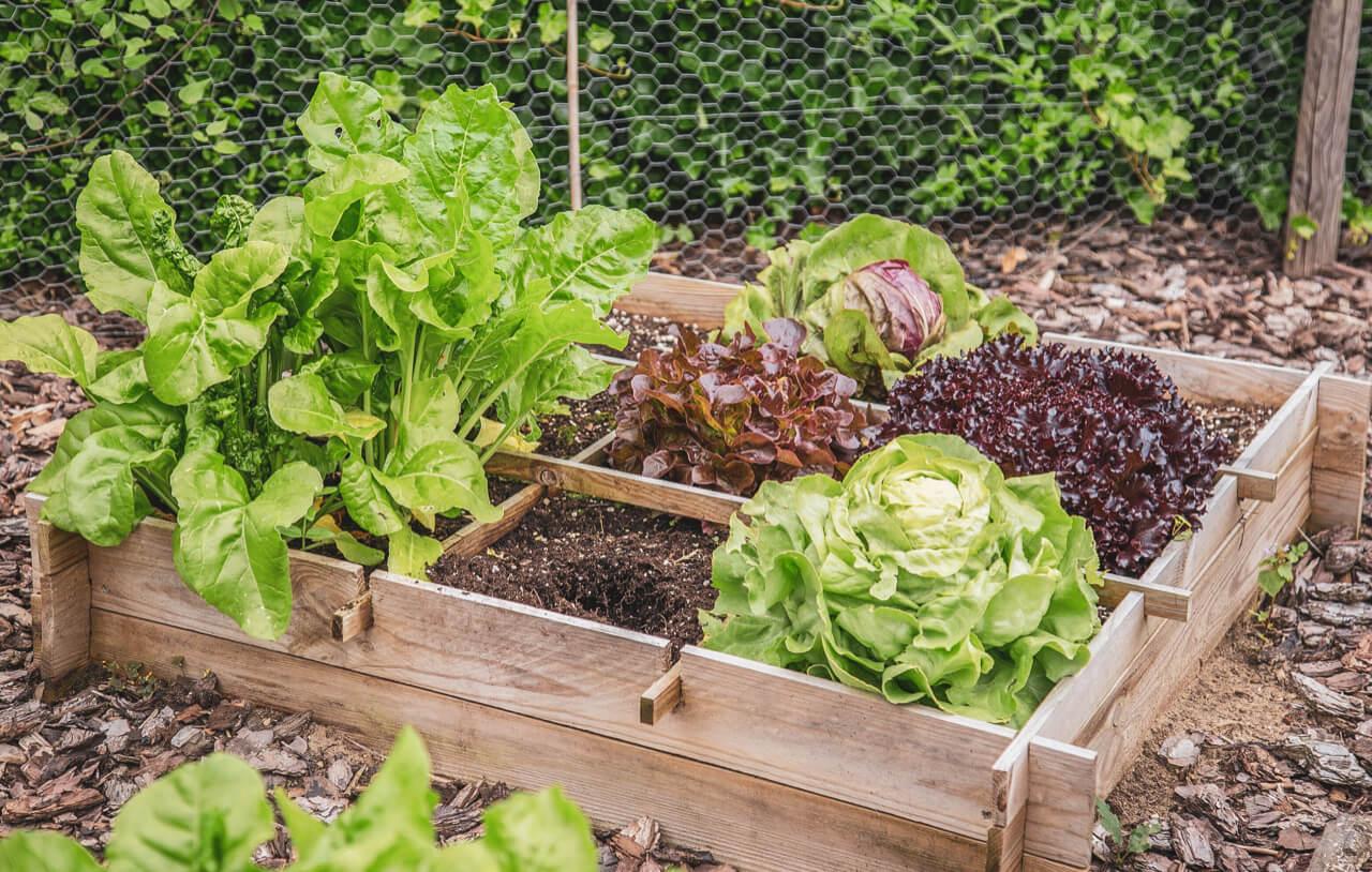 giardino-piccolo-orto
