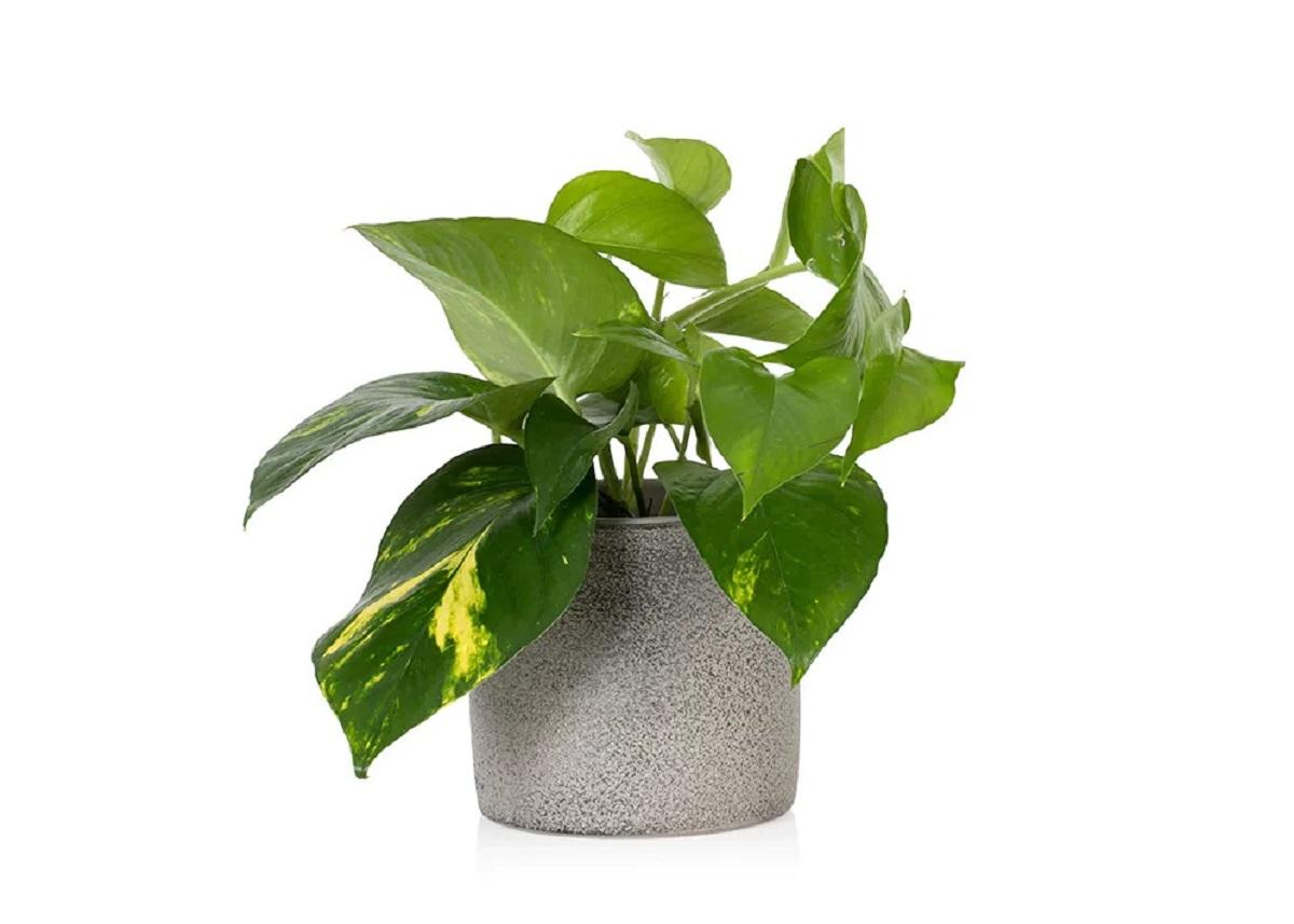 piante per arredare casa in autunno 10 idee e foto
