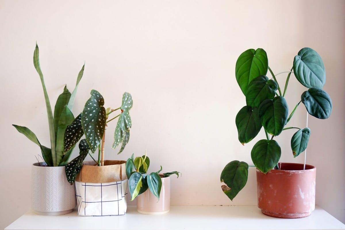 low-light-plants-for-autumn-crop-1600705274-1920×1280